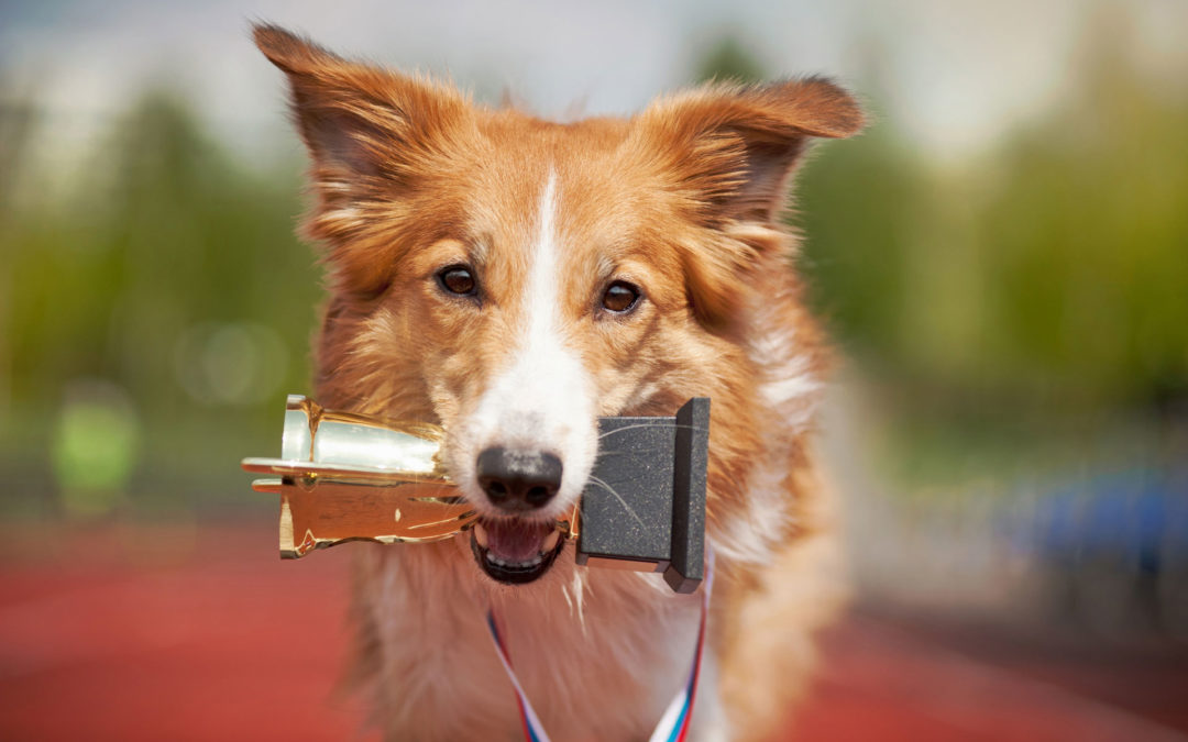 Going For The Gold: Choosing The Top Dogs Of Social Media